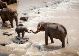Rodinné safari