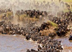 Velká migrace pakoňů