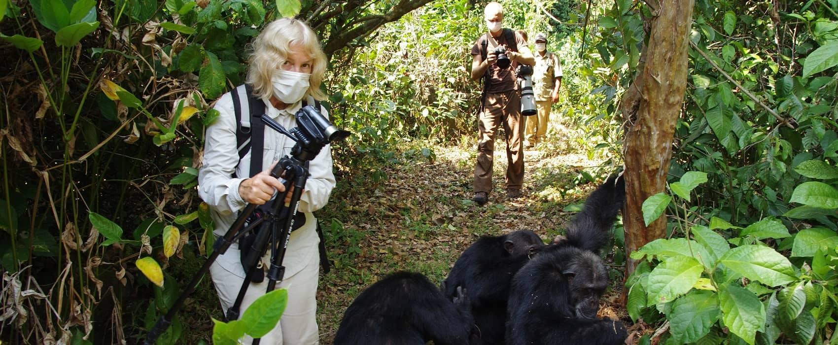 šimpanzi na safari